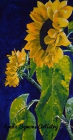 Sunflower WR