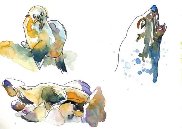 Kaikoura Seals #2